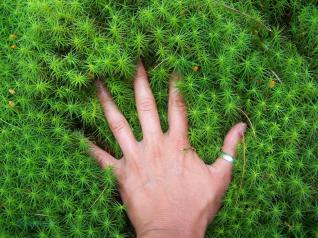 hand_Watermarked