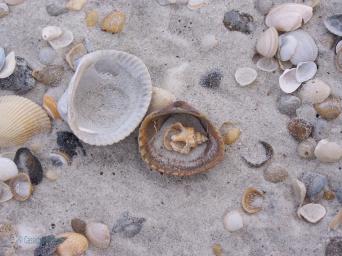 sea shells_Watermarked